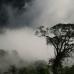Bornean Mists