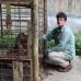 Borneo Sept.2011 Captive Orangutans