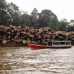 Borneo Sept.2011 Logs, logs, logs, logs. All the way up the river.