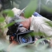 This is the Indonesian cameraman, Ezther, filming a slow-loris (possum like creature with big eyes)