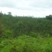 Beautiful forests of Tembak.
