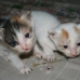 Birth of 4 kittens warmed up the feeling at our longhouse!