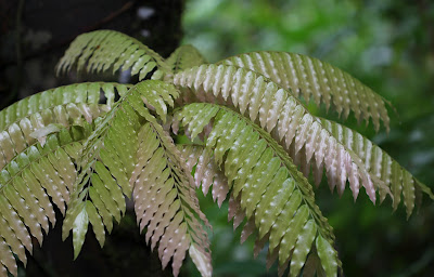 Some of the lush vegetation encountered in walks through the rainforest.