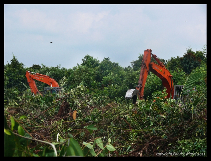 Excavators eating the peat swamp forest
